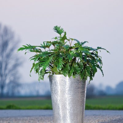 Gehämmertes Aluminium<br>mit Philodendron