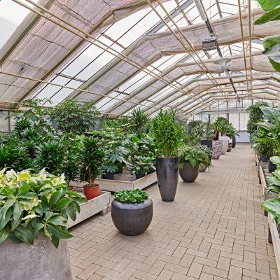 Indoor-Pflanzenbestand