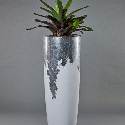 White-Silver <br>mit Vriesea Hybride