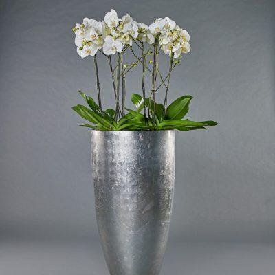 Partner platinum <br>mit Phalaenopsis
