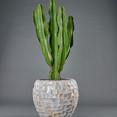 Muschelgefäß <br>mit Euphorbia
