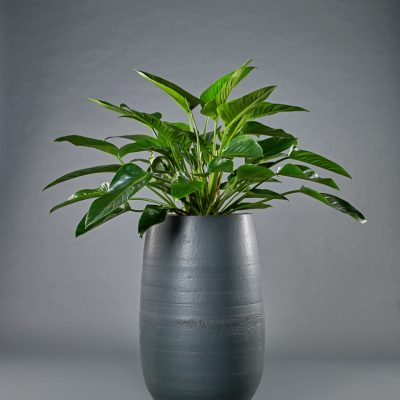 Biarritz <br>mit Philodendron