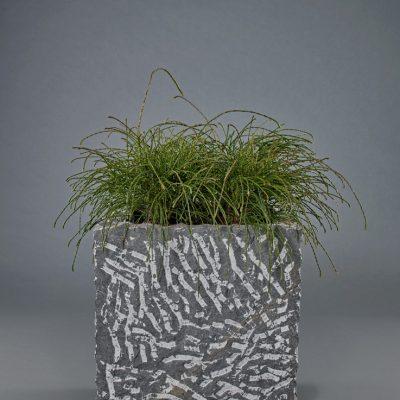Naturstein <br>mit Thuja plicata